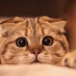 カルカンのくうちゃんの猫CMが感動で泣ける!飼い主の声に反応するのか?内容を紹介!【敬老の日】